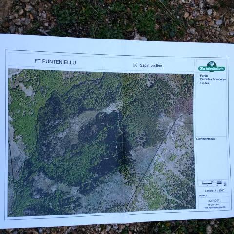 Photographie aérienne de l'unité conservatoire de sapins (Abies alba) de Punteniellu, Corse. Crédits : Arnaud Jouineau / INRA ; Project GenTree