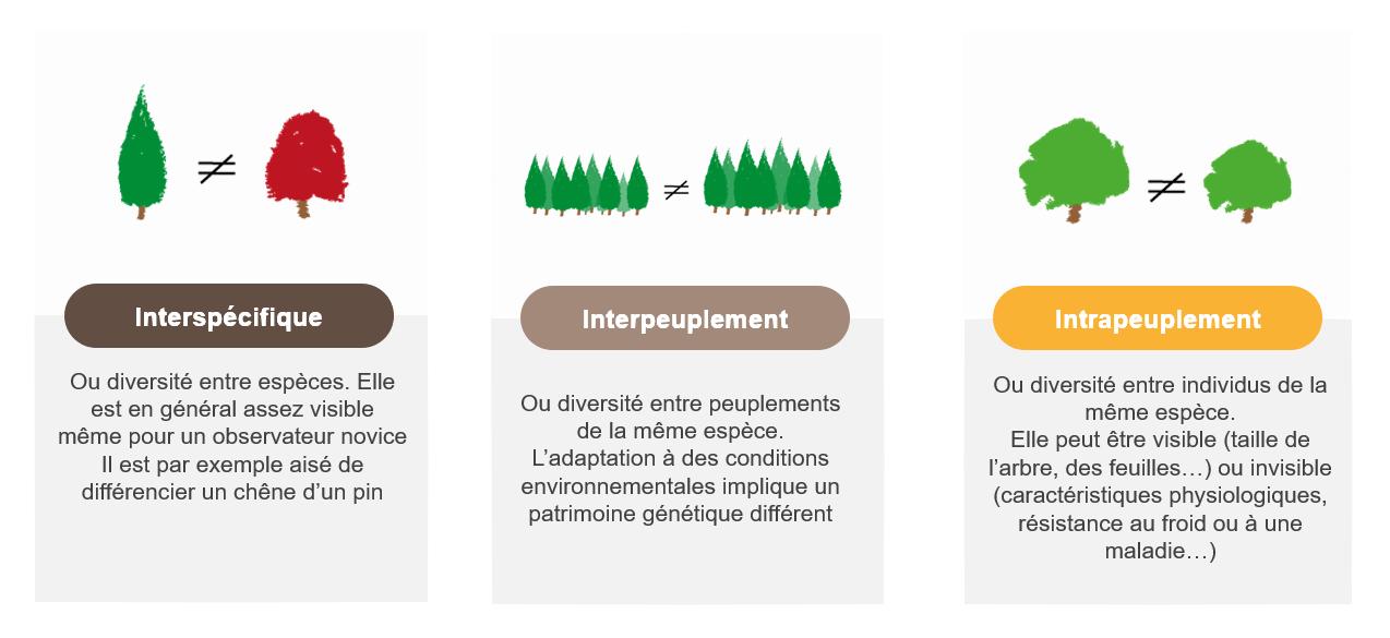 Variabilité génétique des arbres forestiers