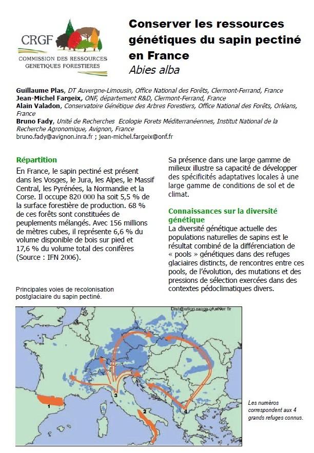 conserver les ressources génétiques du sapin pectiné en France