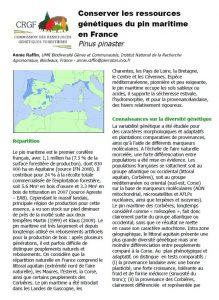 conserver les ressources génétiques du pin maritime en France