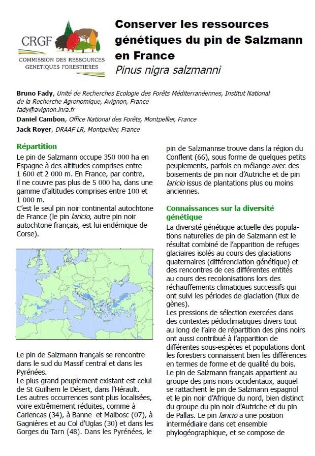 conserver les ressources génétiques du pin de Salzmann en France