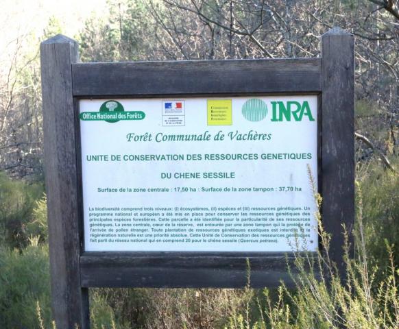 Unité Conservatoire de Chêne sessile de la forêt communale de Vachères.
